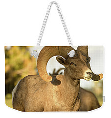 Bighorn Ram Weekender Tote Bag by Scott Warner