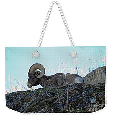 Bighorn Sheep Weekender Tote Bag by Cindy Murphy - NightVisions