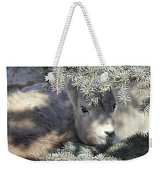 Weekender Tote Bag featuring the photograph Bighorn Sheep Lamb's Hiding Place by Jennie Marie Schell