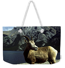 Weekender Tote Bag featuring the photograph Bighorn Sheep by Sally Weigand