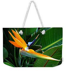 Bird Of Paradise Weekender Tote Bag by Sue Melvin