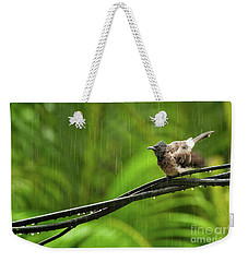 Birds Of Sri Lanka  Pycnonotus Cafer Weekender Tote Bag