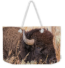 Bison In The Grass Weekender Tote Bag by Mary Hone