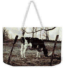 Weekender Tote Bag featuring the photograph Black And White - Cow In Pasture - Vintage by Janine Riley