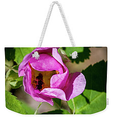 Weekender Tote Bag featuring the photograph Black Bee Collecting Pollen by Darcy Michaelchuk