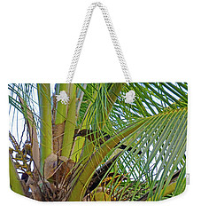 Weekender Tote Bag featuring the photograph Black Bird In Tree by Francesca Mackenney