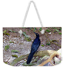 Weekender Tote Bag featuring the photograph Black Bird On Branch by Francesca Mackenney