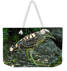 Black Capped Night Heron   Juvenile Weekender Tote Bag