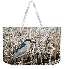 Black-crowned Night Heron 2017-1 Weekender Tote Bag by Thomas Young
