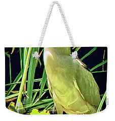 Weekender Tote Bag featuring the photograph Black Crowned Night Heron by Joseph Hollingsworth