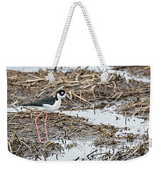 Black-necked Stilt 2017-1 Weekender Tote Bag by Thomas Young