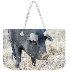 Weekender Tote Bag featuring the photograph Black Pig Close-up by James BO Insogna