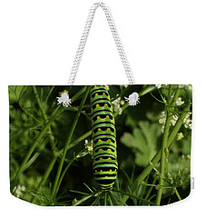 Weekender Tote Bag featuring the painting Black Swallowtail Butteryfly Caterpillar by Chholing Taha