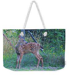 Black-tail Deer Fawn 2 Weekender Tote Bag