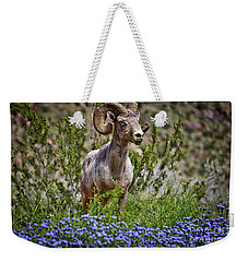 Blooms And Bighorn In Anza Borrego Desert State Park  Weekender Tote Bag