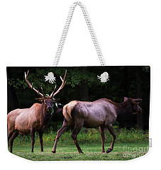 Weekender Tote Bag featuring the photograph Blown Off by Andrea Silies