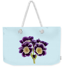 Weekender Tote Bag featuring the photograph Blue Auricula On A Transparent Background by Paul Gulliver