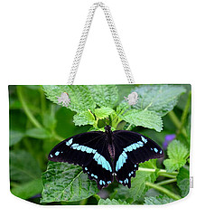 Blue Banded Swallowtail Butterfly Weekender Tote Bag