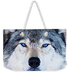 Weekender Tote Bag featuring the photograph Blue Eyed Wolf Portrait by Mircea Costina Photography