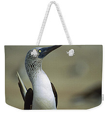 Blue-footed Booby Sula Nebouxii Weekender Tote Bag by Tui De Roy