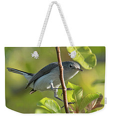 Blue Gray Gnatcatcher Weekender Tote Bag