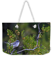Blue-gray Gnatcatcher  Weekender Tote Bag