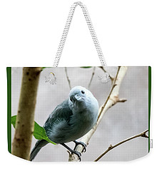 Blue-grey Tanager Weekender Tote Bag