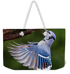 Weekender Tote Bag featuring the photograph Blue Jay In Flight by Mircea Costina Photography