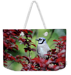 Blue Jay In The Plum Tree Weekender Tote Bag by Trina Ansel