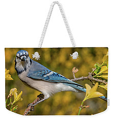 Blue Jay In Yellow Spring Weekender Tote Bag