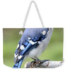 Blue Jay Juvenile Animal Portrait Weekender Tote Bag