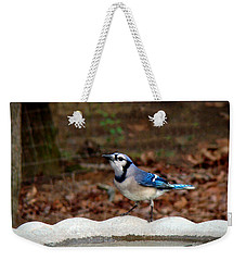 Weekender Tote Bag featuring the photograph Blue Jay Strikes A Pose by Sue Melvin