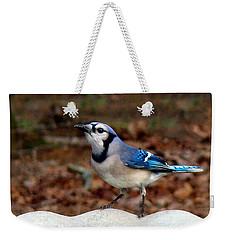 Blue Jay Strikes A Pose Weekender Tote Bag