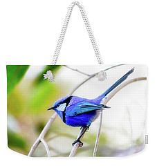 Weekender Tote Bag featuring the photograph Blue Wren, Margaret River by Dave Catley