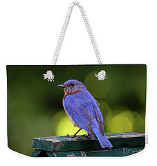 Weekender Tote Bag featuring the photograph Bluebird 0618162 by Douglas Stucky