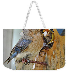 Weekender Tote Bag featuring the photograph Bluebird 072616 by Douglas Stucky