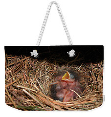 Weekender Tote Bag featuring the photograph Bluebird Babies by Marie Hicks