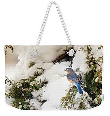 Weekender Tote Bag featuring the photograph Bluebird On Snow-laden Cedar by Robert Frederick