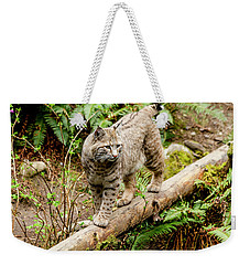 Bobcat In Forest Weekender Tote Bag