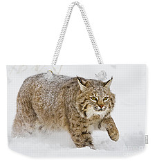 Bobcat In Snow Weekender Tote Bag