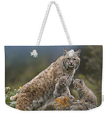 Bobcat Mother And Kittens North America Weekender Tote Bag