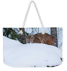 Bobcat On Snow Hill Weekender Tote Bag by Steve McKinzie