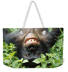 Weekender Tote Bag featuring the photograph Bonobo Smiling by Cyril Ruoso