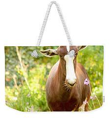 Bontebok Weekender Tote Bag
