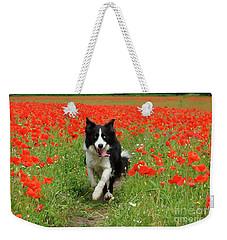 Border Collie In Poppy Field Weekender Tote Bag