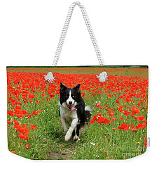 Border Collie In Poppy Field Weekender Tote Bag