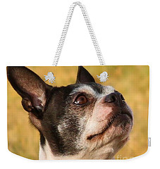 Weekender Tote Bag featuring the photograph Boston Terrier Portrait by Debbie Stahre