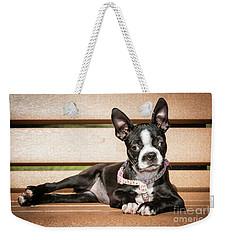 Boston Terrier Puppy Relaxing Weekender Tote Bag by Stephanie Hayes