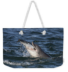 Bottlenose Dolphin Eating A Salmon - Scotland #5 Weekender Tote Bag