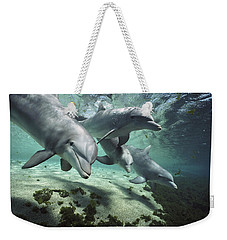 Weekender Tote Bag featuring the photograph Four Bottlenose Dolphins Hawaii by Flip Nicklin